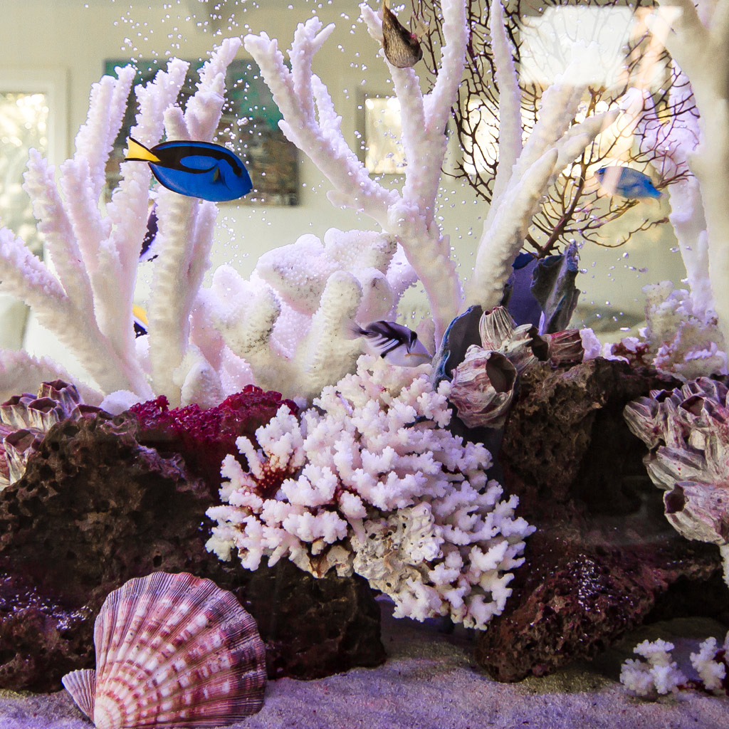 Types of Aquariums - Decorative Coral