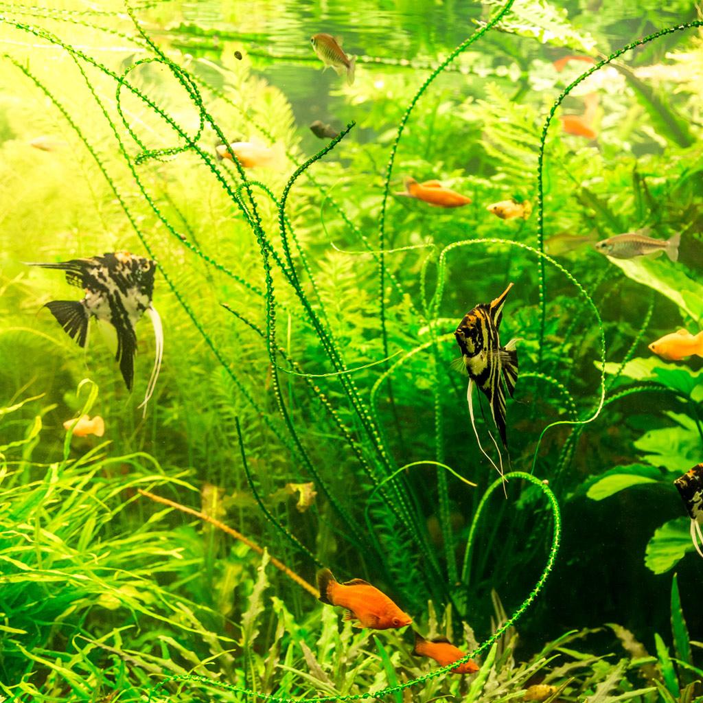 Types of Aquariums - Fresh Water Aquarium
